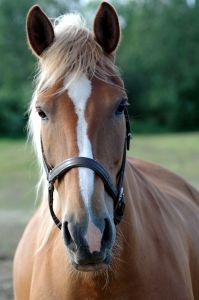 Is Selling Your Horse Online An Option For You?