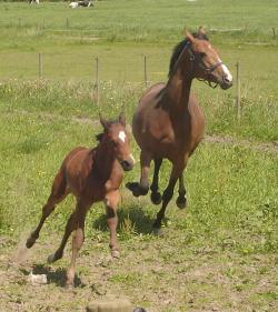 Running Mare and Foal