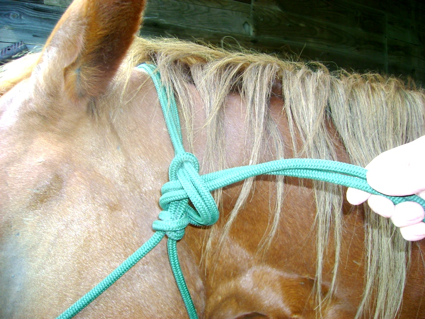 Horse With Rope Halter