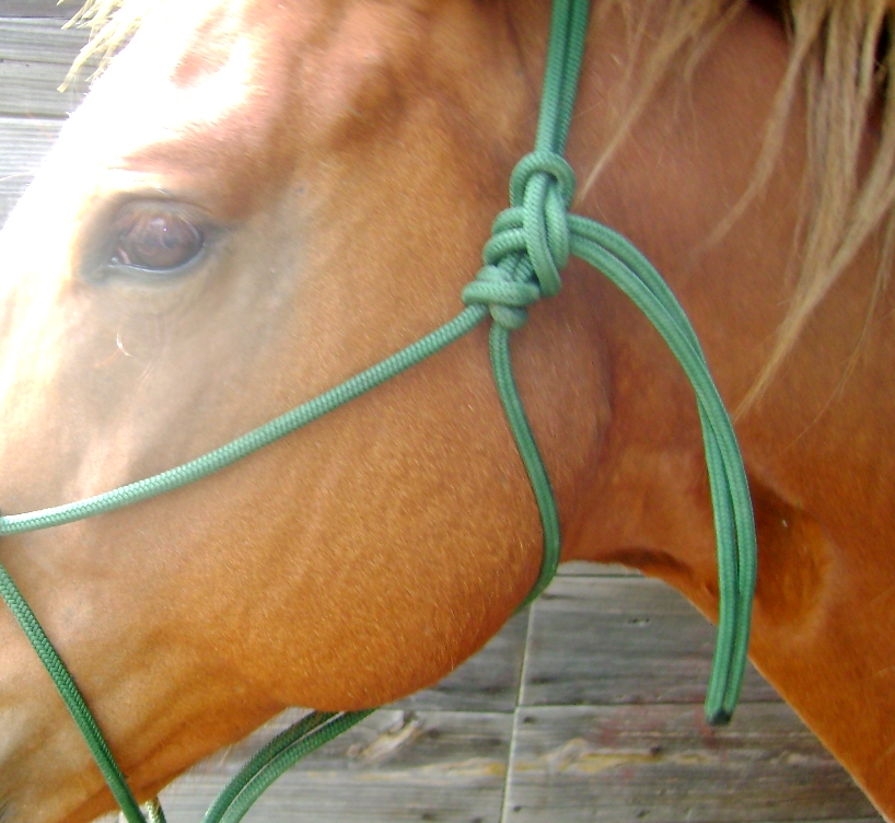 Tying Your Own Rope Halter