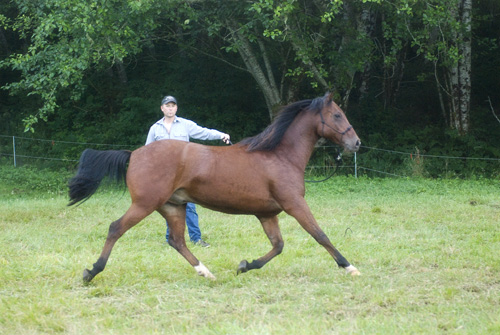 Training a Horse to Lunge